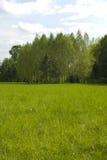 桦树树丛草甸 库存图片
