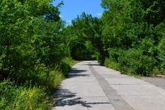 桦树树丛路森林 免版税库存图片