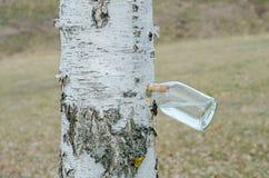 桦树树汁 免版税库存图片