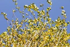 桦树森林在阳光下 免版税库存图片