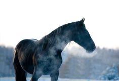 桦树森林在黑白的冬天 免版税库存照片
