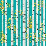 桦树森林模式 免版税库存照片