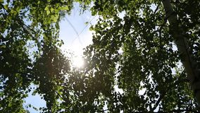 桦树森林的秋天风景,在桦树后的阳光 星期日 库存照片