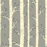 桦树森林背景 免版税库存图片