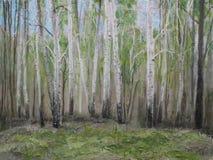 桦树森林 免版税图库摄影