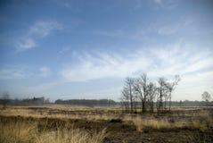 桦树欧石南丛生的荒野 库存图片