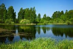 桦树池塘 免版税库存图片