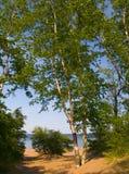 桦树沙子水 库存照片