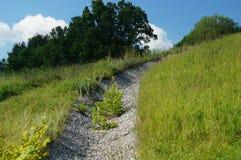 年轻桦树沿小小卵石道路在一个峭壁,秀丽俄国人自然的增长 库存照片