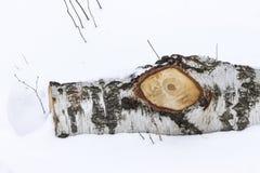 桦树注册雪 33c 1月横向俄国温度ural冬天 库存图片
