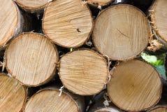 桦树火木头 免版税库存照片