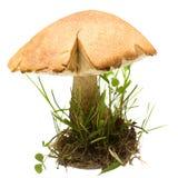 桦树牛肝菌查出的蘑菇 库存照片