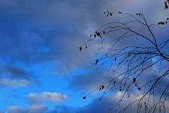 桦树的分支与飞行的在10月离开 免版税库存图片
