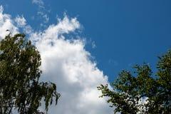桦树的分行 免版税库存照片