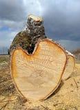 桦树的被锯的树干在地面上说谎 免版税库存图片