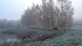 桦树胡同的看法在有雾的10月霜Petrovskoye,血污的Pushkinskie的 俄国 股票录像
