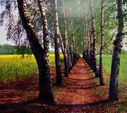 桦树胡同 库存照片