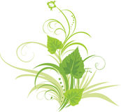桦树花卉叶子装饰品 库存图片