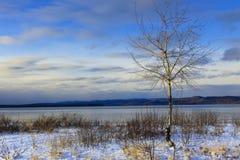 桦树苏必利尔湖畔 免版税库存照片