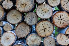 桦树被锯的棕色木头  免版税图库摄影