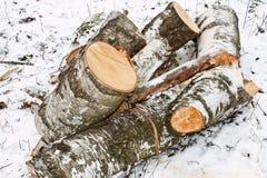 桦树记录雪 库存照片