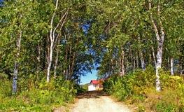 桦树路径 免版税库存照片