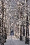 桦树运输路线 图库摄影