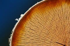 桦树部分 免版税库存图片