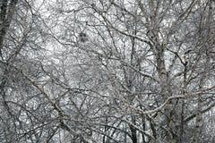桦树隔行扫描分支背景  图库摄影