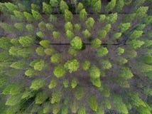 桦树鸟瞰图  免版税库存图片