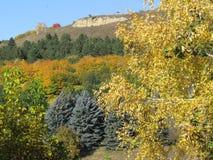 桦树,蓝色云杉,杉木,核桃,栗子在舞蹈秋天 库存照片