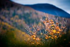 秋天风景 库存图片
