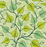 桦树离开无缝的样式 免版税库存照片