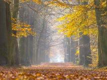 桦树黄色叶子在秋天期间的 库存图片
