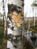 桦树SAP的汇集 免版税库存图片