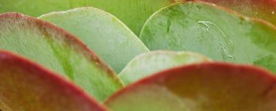 桨植物 免版税库存照片