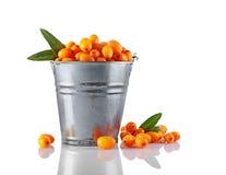 桶健康新鲜的未加工的海鼠李莓果 库存图片