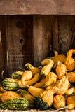 桶在秸杆背景的金瓜 图库摄影