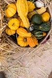 桶在秸杆背景的金瓜 库存图片