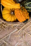 桶在秸杆背景的金瓜 免版税库存图片