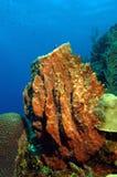桶巨人海绵 库存图片