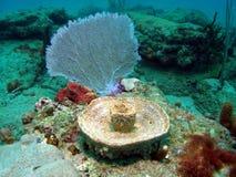 桶珊瑚风扇 库存图片