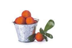 桶用杨梅在白色的unedo果子 库存图片