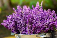 桶用淡紫色 免版税图库摄影