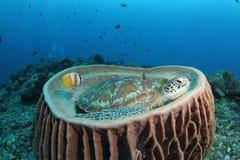 桶绿色坐的海绵乌龟 库存照片