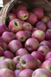 桶苹果 免版税库存图片