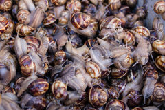 桶蜗牛在市场上 免版税库存图片