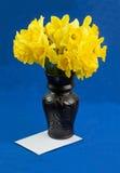 桶水仙在花瓶,在蓝色背景的信封开花 免版税库存照片