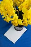 桶水仙在花瓶,在蓝色背景的信封开花 库存图片