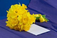 桶水仙开花,在青紫色背景的信封 免版税库存图片